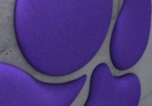 WB Closeup_Purple