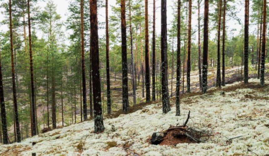 Nordgrona Forest slider